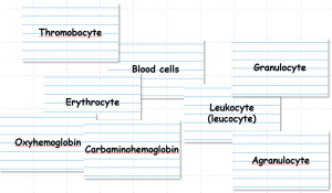 Flashcard concept map