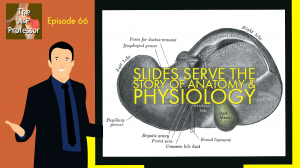 Slides serve the story of anatomy & physiology