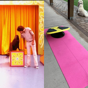 on left is Kevin Patton with a sea lion on a brightly colored seat, on right is a bright pink yoga mat with a yellow Stealth board