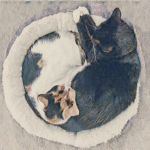 two sleeping cats forming tai chi symbol