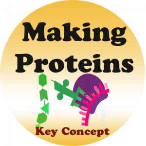 Sample badge: Making Proteins