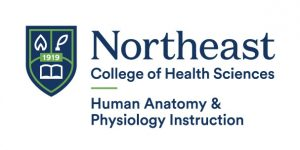 Logo of Northeast College of Health Sciences, Human Anatomy & Physiology Instruction